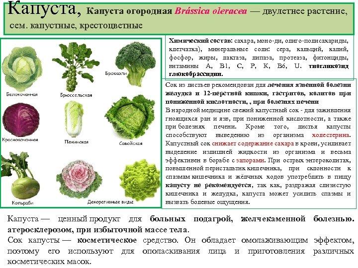 Капуста, Капуста огородная Brássica olerаcea — двулетнее растение, сем. капустные, крестоцветные Химический состав: сахара,