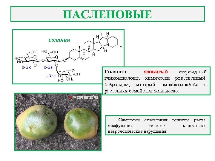 ПАСЛЕНОВЫЕ соланин Соланин — ядовитый стероидный гликоалкалоид, химически родственный стероидам, который вырабатывается в растениях