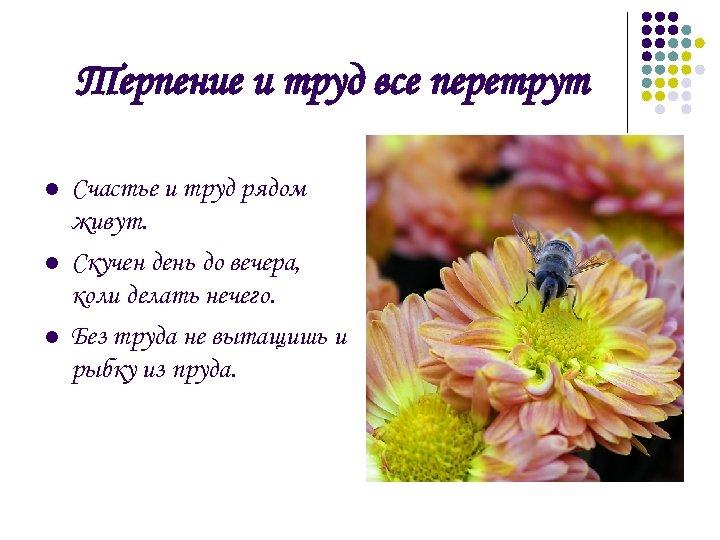 Терпение и труд все перетрут l l l Счастье и труд рядом живут. Скучен