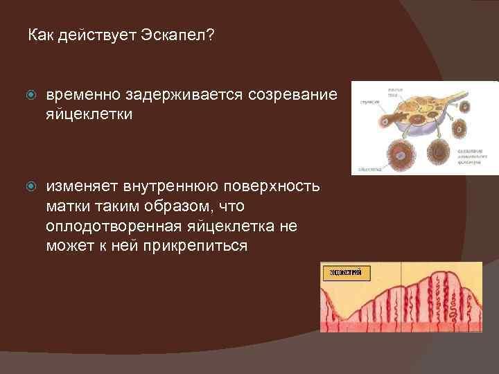 Как действует Эскапел? временно задерживается созревание яйцеклетки изменяет внутреннюю поверхность матки таким образом, что