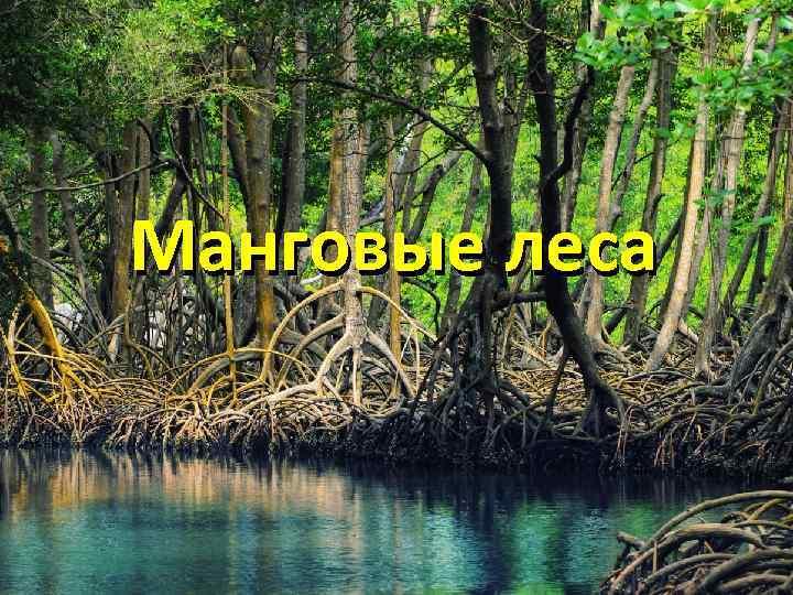 Манговые леса