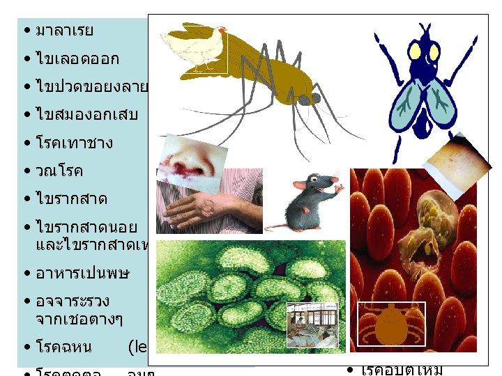 • มาลาเรย • ไขหวดใหญสายพนธ • ไขเลอดออก • ไขปวดขอยงลาย (chik. ) • ไขสมองอกเสบ โรค