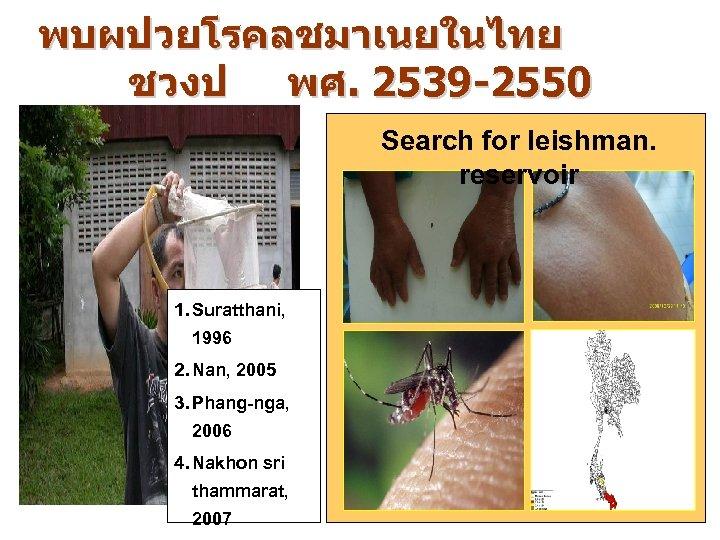 พบผปวยโรคลชมาเนยในไทย ชวงป พศ. 2539 -2550 Search for leishman. reservoir 1. Suratthani, 1996 2. Nan,