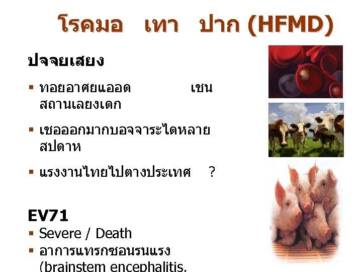 โรคมอ เทา ปาก (HFMD) ปจจยเสยง § ทอยอาศยแออด สถานเลยงเดก เชน § เชอออกมากบอจจาระไดหลาย สปดาห § แรงงานไทยไปตางประเทศ
