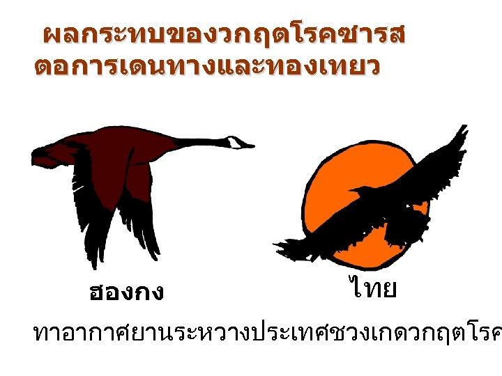ผลกระทบของวกฤตโรคซารส ตอการเดนทางและทองเทยว ฮองกง ไทย ทาอากาศยานระหวางประเทศชวงเกดวกฤตโรค