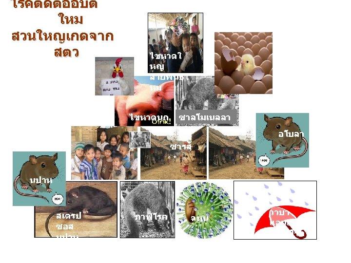 โรคตดตออบต ใหม สวนใหญเกดจาก สตว ไขหวดใ หญ สายพนธใ หม ไขหวดนก ซาลโมเนลลา ซารส อโบลา นปาห สเตรป