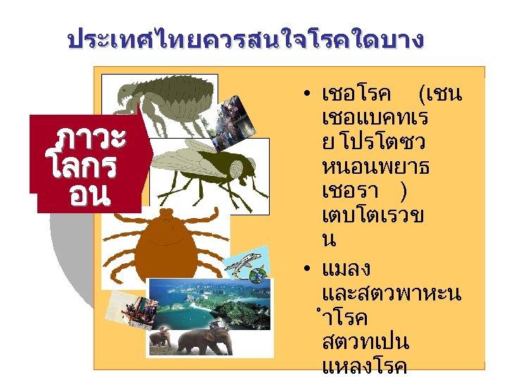 ประเทศไทยควรสนใจโรคใดบาง • เชอโรค (เชน เชอแบคทเร โรค ตดต ปจจย ภาวะ อท ย โปรโตซว หนอนพยาธ เสรมอ