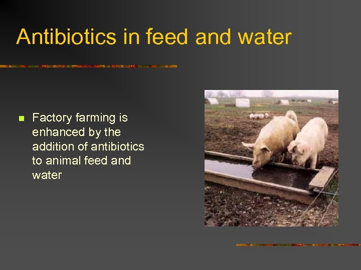 Antibiotics in feed and water n Factory farming is enhanced by the addition of