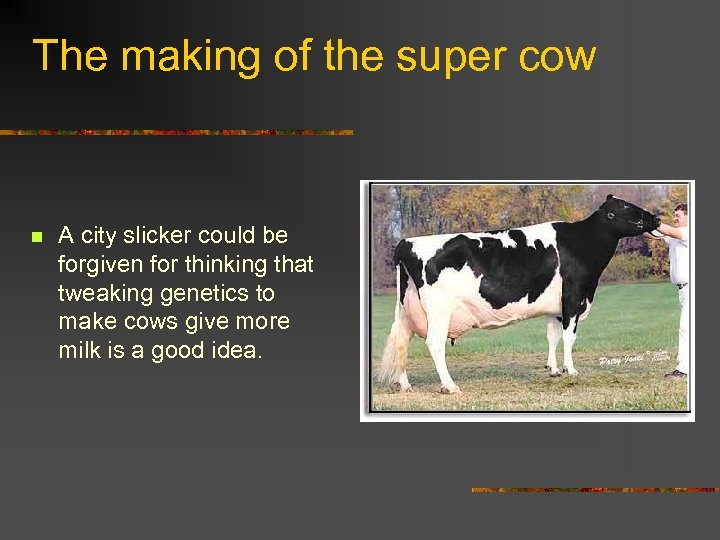 The making of the super cow n A city slicker could be forgiven for