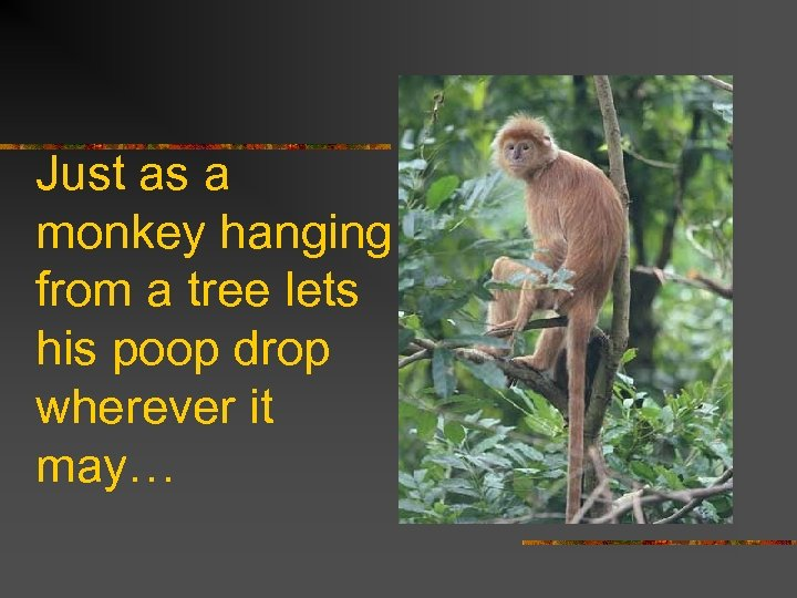 Just as a monkey hanging from a tree lets his poop drop wherever it