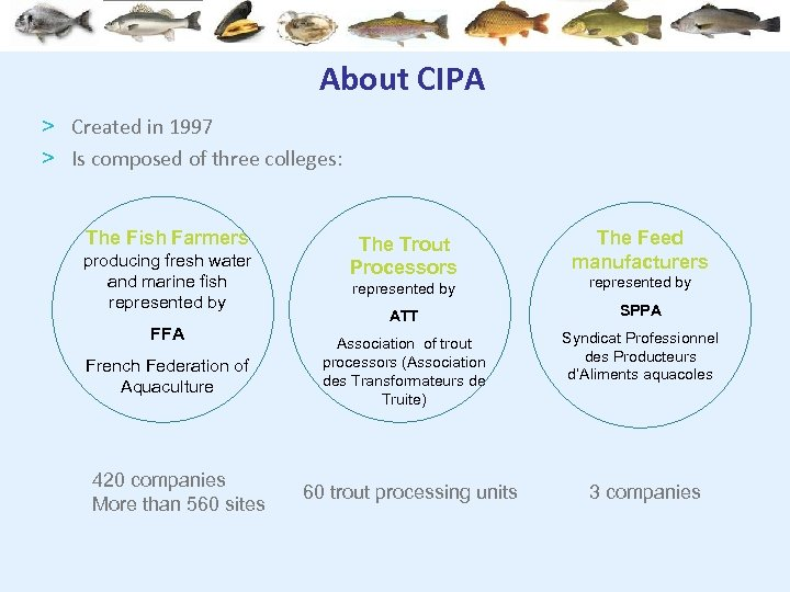 About CIPA > Created in 1997 > Is composed of three colleges: The Fish