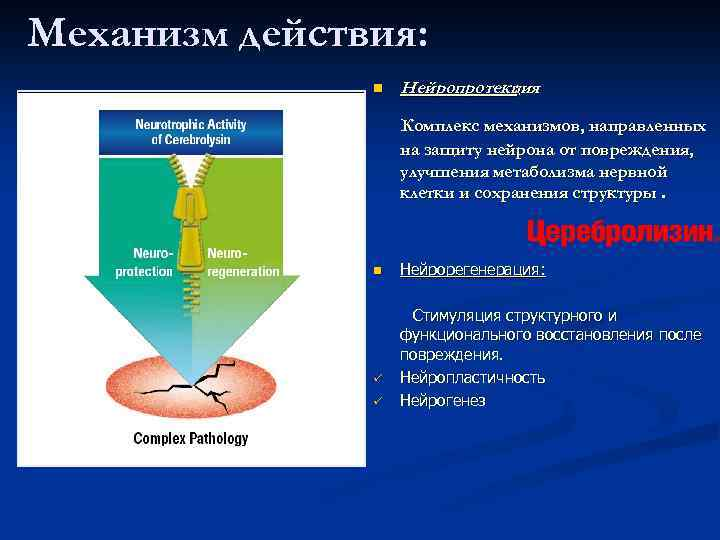 Механизм действия: n Нейропротекция : Комплекс механизмов, направленных на защиту нейрона от повреждения, улучшения