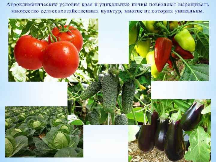 Агроклиматические условия края и уникальные почвы позволяют выращивать множество сельскохозяйственных культур, многие из которых