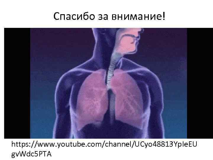 Спасибо за внимание! https: //www. youtube. com/channel/UCyo 48813 Yp. Ie. EU gv. Wdc 5