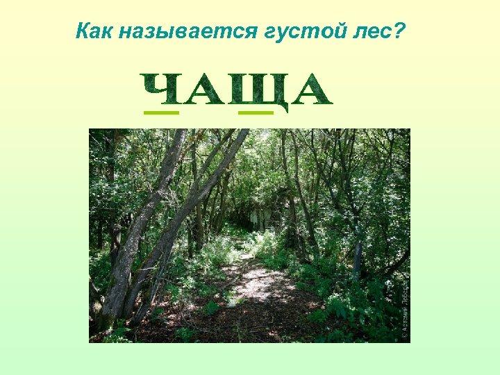 Как называется густой лес?
