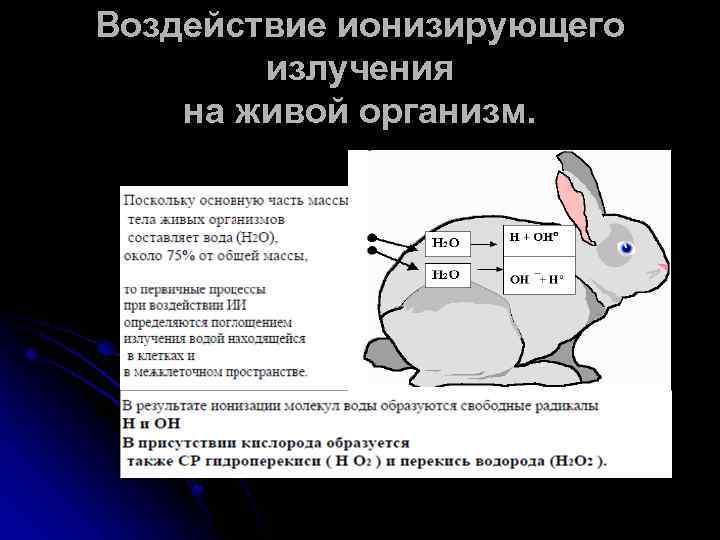 Воздействие ионизирующего излучения на живой организм.