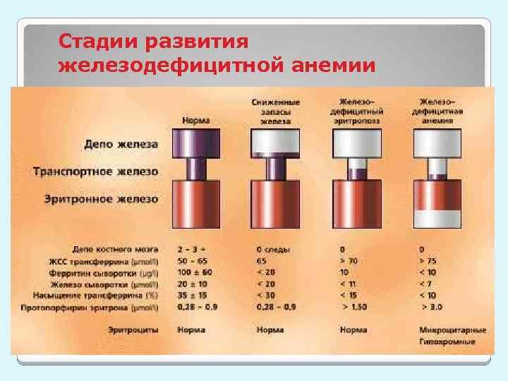 Стадии развития железодефицитной анемии