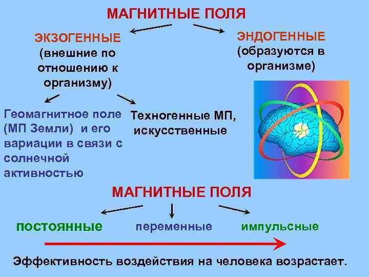 МАГНИТНЫЕ ПОЛЯ ЭНДОГЕННЫЕ (образуются в организме) ЭКЗОГЕННЫЕ (внешние по отношению к организму) Геомагнитное поле