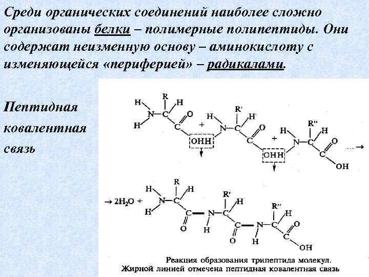 Среди органических соединений наиболее сложно организованы белки – полимерные полипептиды. Они содержат неизменную основу