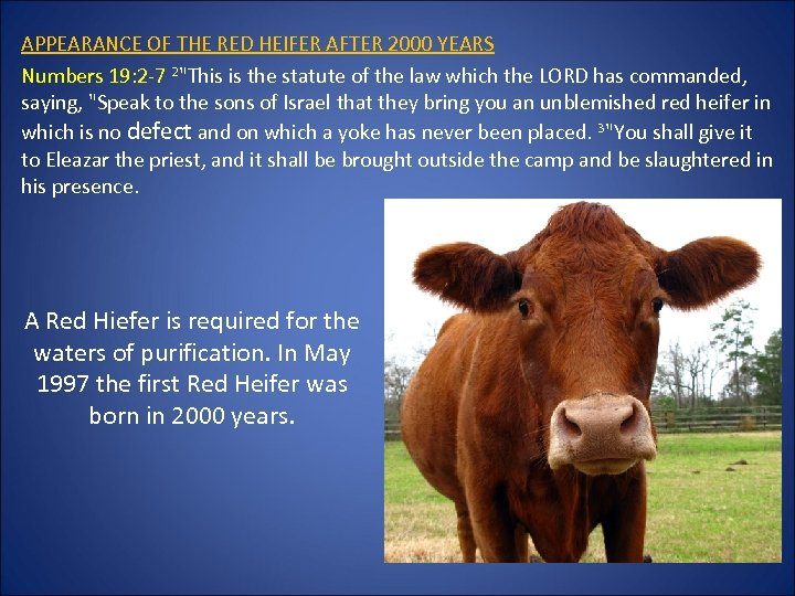 APPEARANCE OF THE RED HEIFER AFTER 2000 YEARS Numbers 19: 2 -7 2