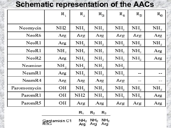 Schematic representation of the AACs