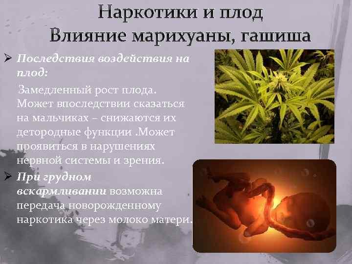 Марихуаны употребление как беременность влияет на клен конопля на