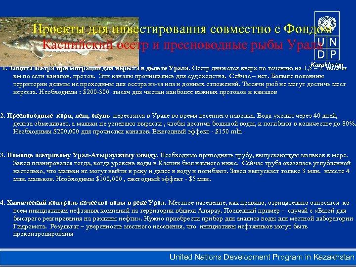 Проекты для инвестирования совместно с Фондом Каспийский осетр и пресноводные рыбы Урала Kazakhstan 1.