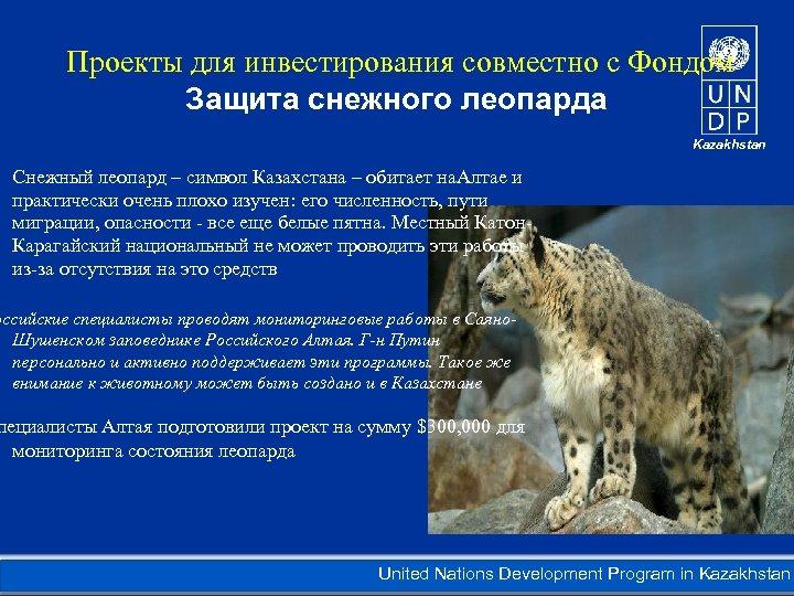 Проекты для инвестирования совместно с Фондом Защита снежного леопарда Kazakhstan Снежный леопард –