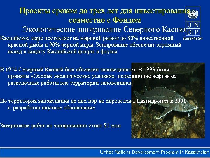 Проекты сроком до трех лет для инвестирования совместно с Фондом Экологическое зонирование Северного Каспия