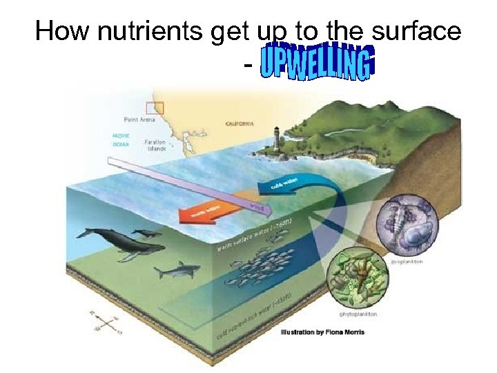 How nutrients get up to the surface -