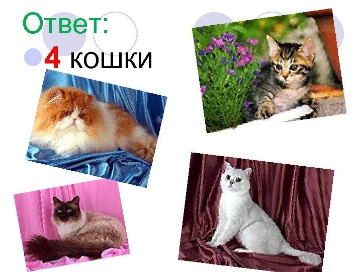 Ответ: l 4 кошки