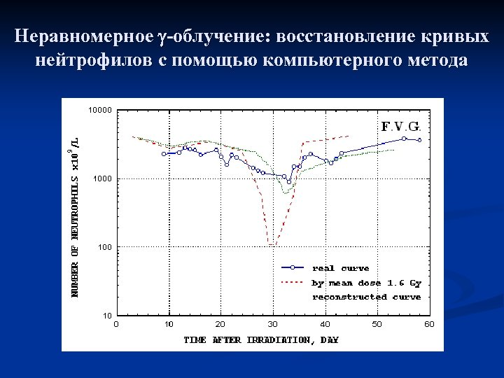 Неравномерное -облучение: восстановление кривых нейтрофилов с помощью компьютерного метода