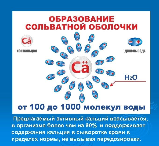 Предлагаемый активный кальций всасывается, в организме более чем на 90% и поддерживает содержания кальция