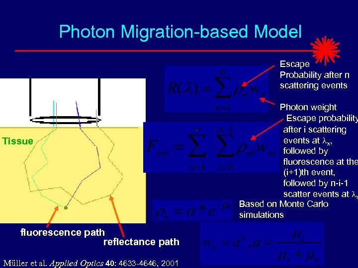 Photon Migration-based Model Escape Probability after n scattering events Tissue fluorescence path reflectance path