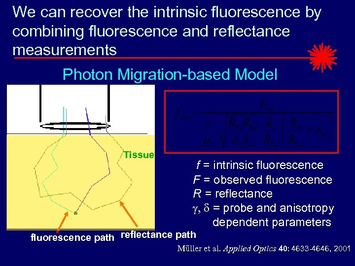 We can recover the intrinsic fluorescence by combining fluorescence and reflectance measurements Photon Migration-based