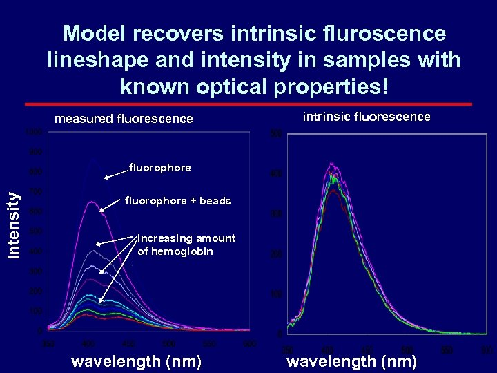Model recovers intrinsic fluroscence lineshape and intensity in samples with known optical properties! measured