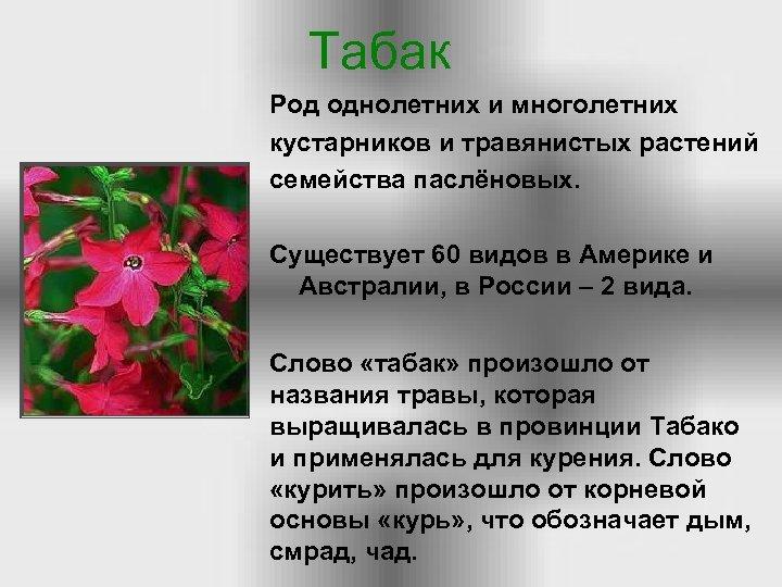 Табак Род однолетних и многолетних кустарников и травянистых растений семейства паслёновых. Существует 60 видов