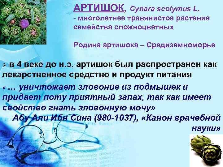 АРТИШОК, Cynara scolymus L. - многолетнее травянистое растение семейства сложноцветных Родина артишока – Средиземноморье