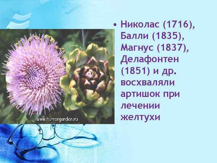 • Николас (1716), Балли (1835), Магнус (1837), Делафонтен (1851) и др. восхваляли артишок