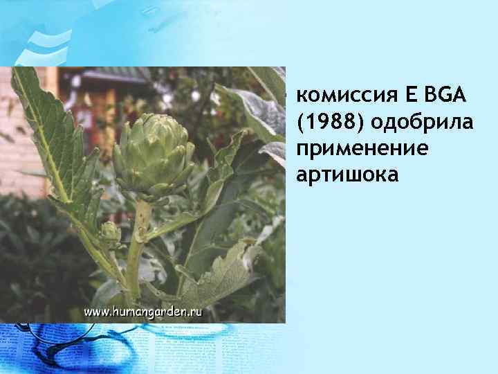 • комиссия E BGA (1988) одобрила применение артишока