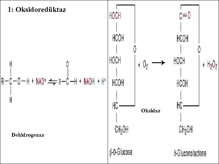 1: Oksidoredüktaz Oksidaz Dehidrogenaz - -