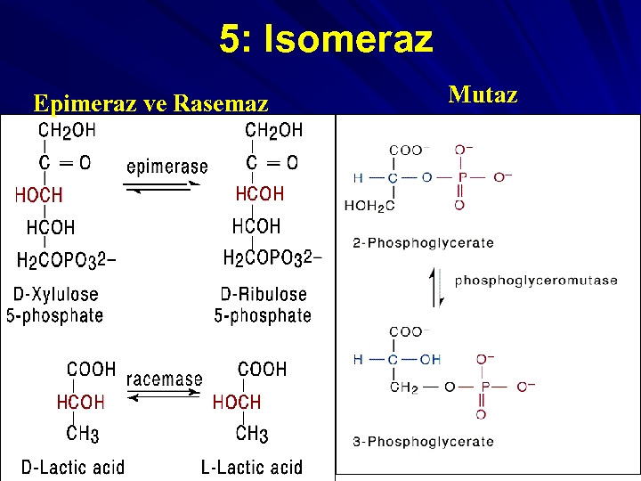 5: Isomeraz Epimeraz ve Rasemaz Mutaz