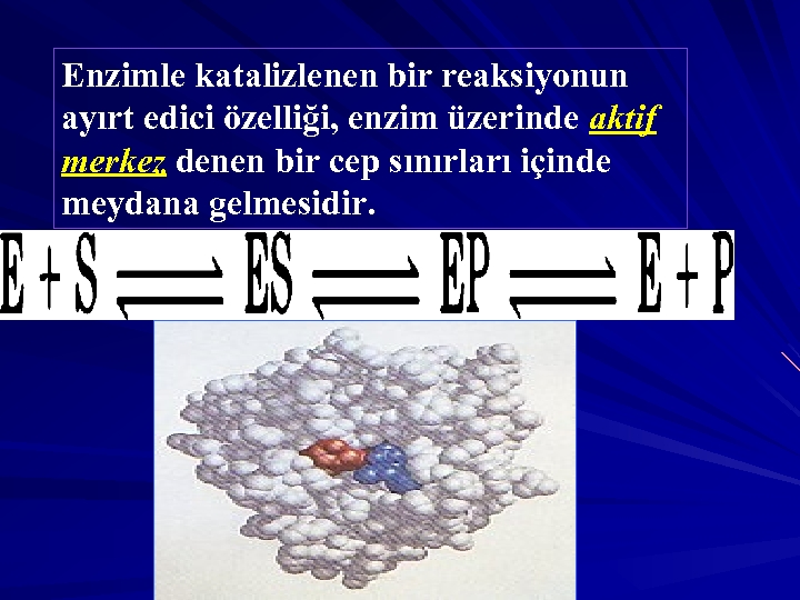 Enzimle katalizlenen bir reaksiyonun ayırt edici özelliği, enzim üzerinde aktif merkez denen bir cep