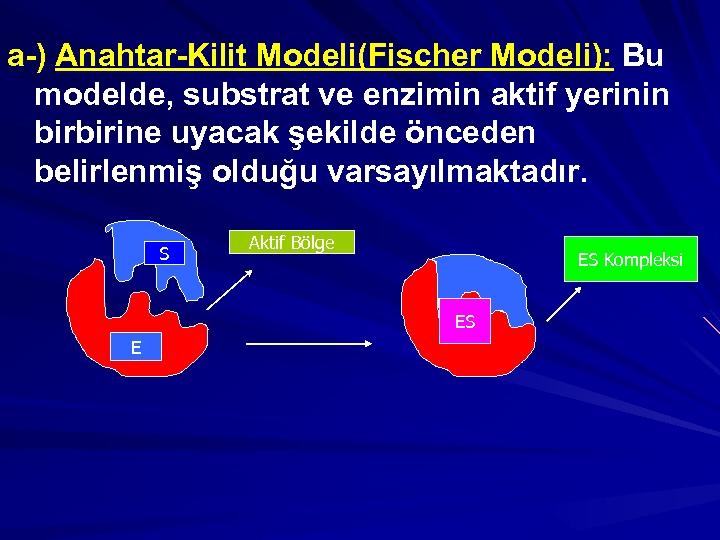 a-) Anahtar-Kilit Modeli(Fischer Modeli): Bu modelde, substrat ve enzimin aktif yerinin birbirine uyacak şekilde
