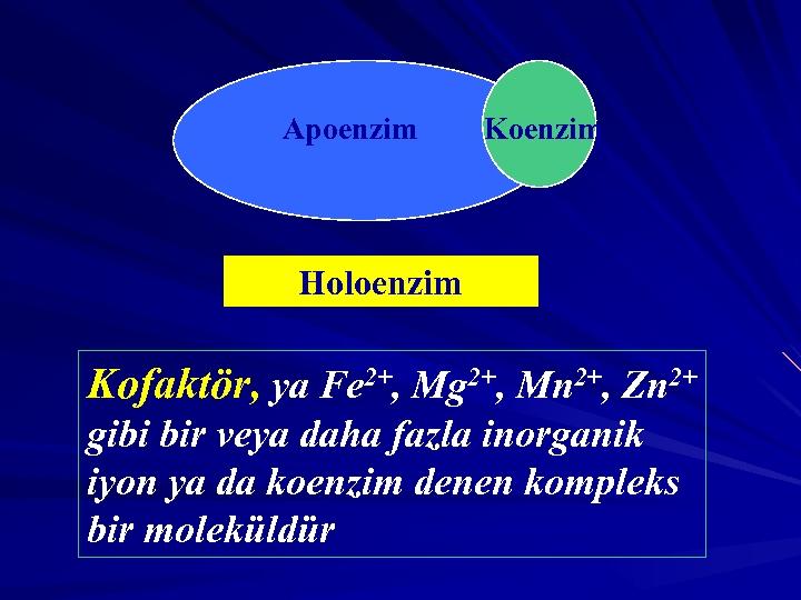 Apoenzim Koenzim Holoenzim Kofaktör, ya Fe 2+, Mg 2+, Mn 2+, Zn 2+ gibi