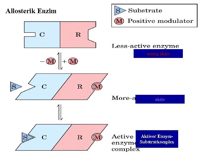 Allosterik Enzim wenig aktiv Aktiver Enzym. Substratkomplex