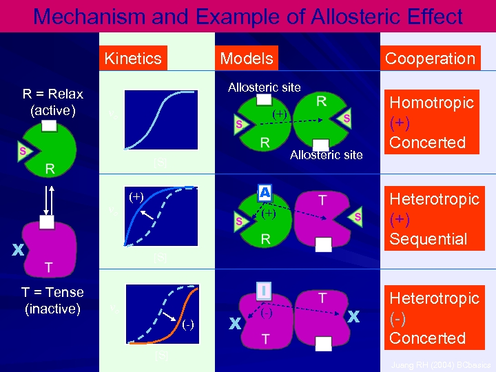 Mechanism and Example of Allosteric Effect Kinetics R = Relax (active) Models Allosteric site