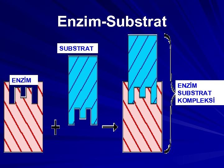 Enzim-Substrat SUBSTRAT ENZİM SUBSTRAT KOMPLEKSİ