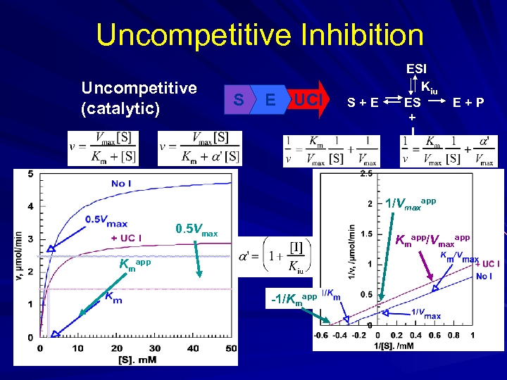 Uncompetitive Inhibition Uncompetitive (catalytic) S E UCI S+E ESI Kiu ES + I E+P