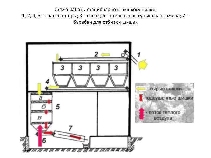 Схема работы стационарной шишкосушилки: 1, 2, 4, 6 – транспортеры; 3 – склад; 5